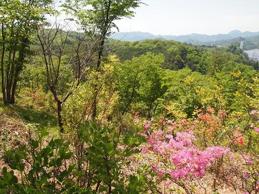 栃木植物園山頂遠望