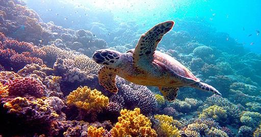 ネイチャーウミガメ