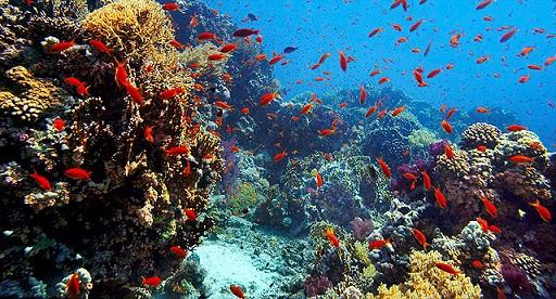 ネイチャー熱帯魚