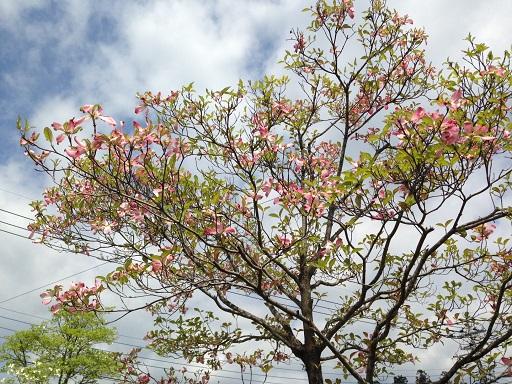 ランニング街路樹