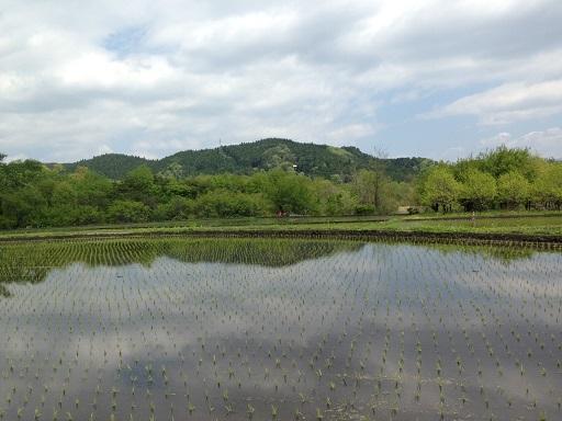ランニング畑に景色