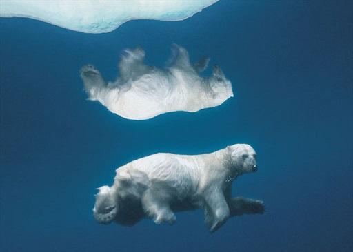 ニックレン白熊