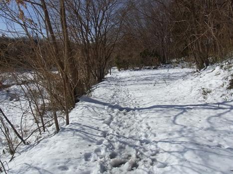 「北本自然観察公園、雪の翌日(1)」