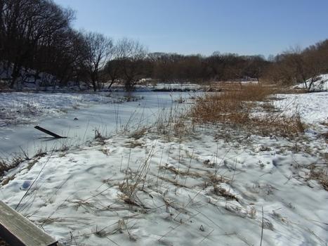 「北本自然観察公園、雪の翌日(2)」