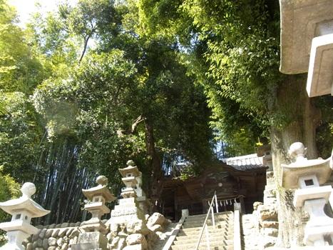 きれぎれの風彩 「白山神社の大カシ」1-1