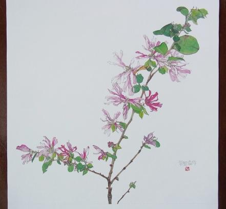 きれぎれの風彩 「野の花カレンダー:3月」