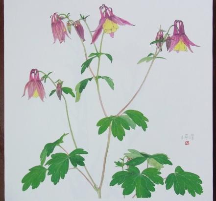 きれぎれの風彩 「野の花カレンダー:5月」-1