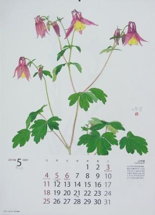 きれぎれの風彩 「野の花カレンダー:5月」-2