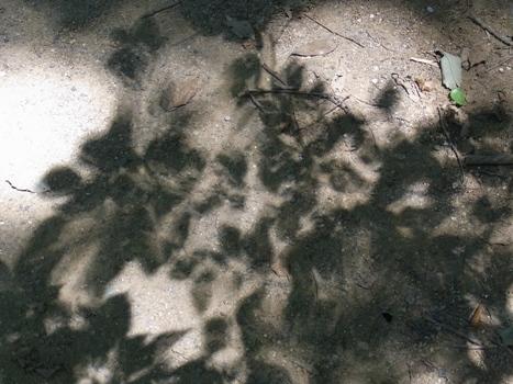 「影葉・木漏れ日」