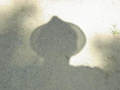 きれぎれの風彩 「影葉・木漏れ日」07