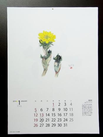 きれぎれの風彩 「野の花カレンダー」1-1
