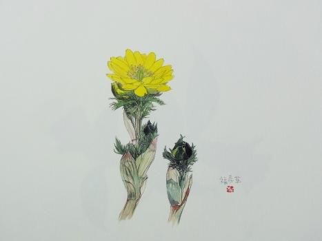 きれぎれの風彩 「野の花カレンダー」1-2