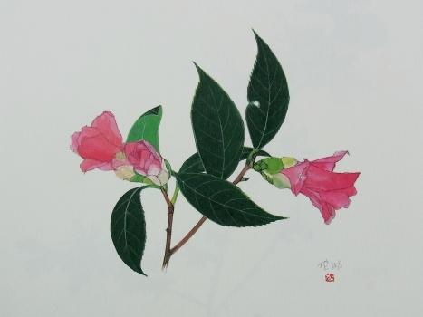きれぎれの風彩 「野の花カレンダー」2-2
