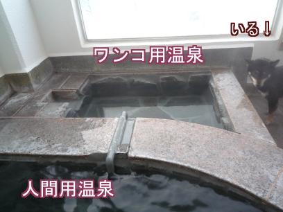 ワンコ用温泉!