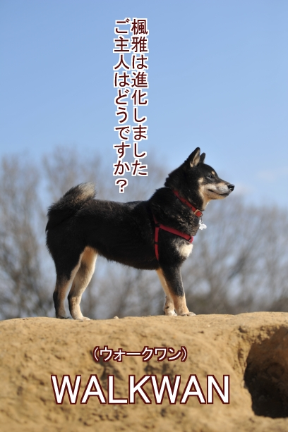 進化した犬