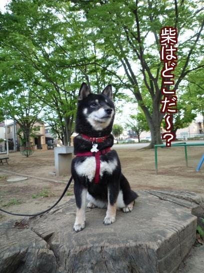 柴ちゃん発見!!