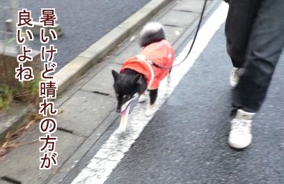 散歩が大好きだ