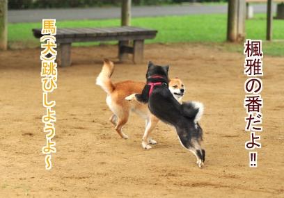 犬とびしよう