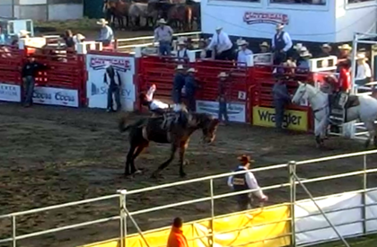 rodeo1resized2.png