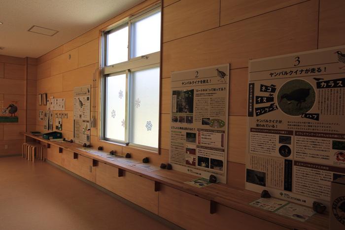 ヤンバルクイナ生態展示学習施設3