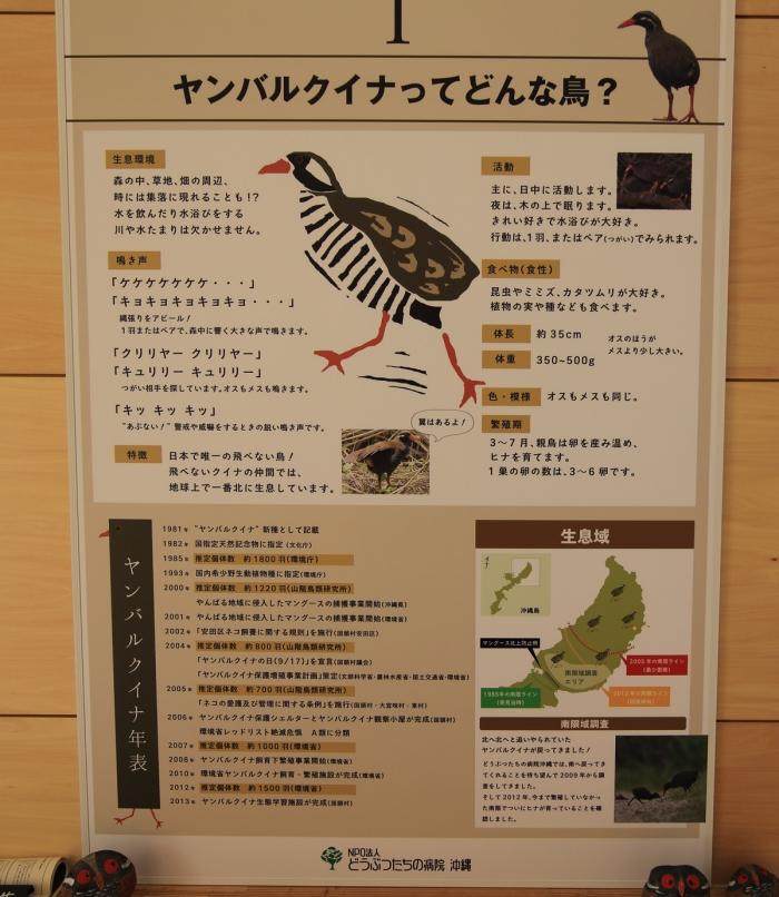 ヤンバルクイナ生態展示学習施設4