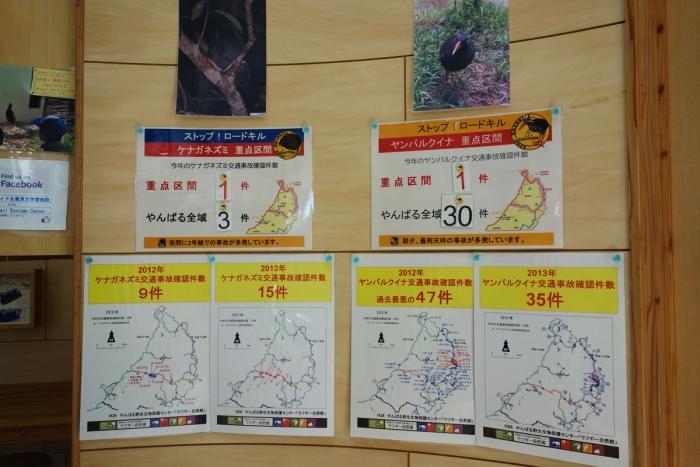 ヤンバルクイナ生態展示学習施設5
