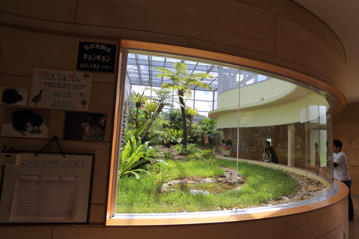 ヤンバルクイナ生態展示学習施設6