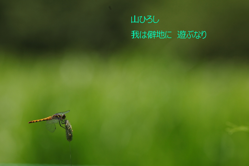 IMG_2550-2のコピー