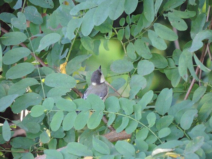 シジュウカラ幼鳥s