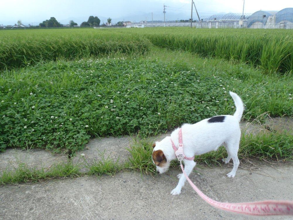 マロン散歩