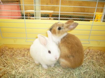 2014-05-26 26年度5月24日、25日川和保育園、ウサギ 011 (800x600)