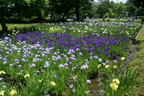 2014-06-10 26年度年長花菖蒲園外保育6月10日 032 (800x535)