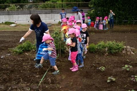 2014-06-27 平成26年度6月27日ジャガイモ掘り・ 010 (800x536)