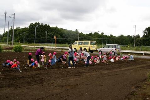 2014-06-27 平成26年度6月27日ジャガイモ掘り・ 012 (800x536)