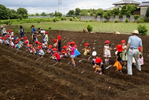 2014-06-27 平成26年度6月27日ジャガイモ掘り・ 041 (800x536)