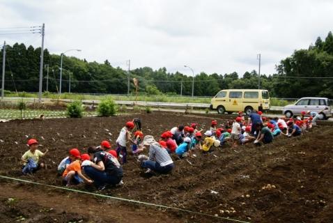2014-06-27 平成26年度6月27日ジャガイモ掘り・ 047 (800x536)