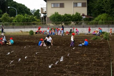 2014-06-27 平成26年度6月27日ジャガイモ掘り・ 061 (800x536)