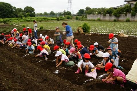 2014-06-27 平成26年度6月27日ジャガイモ掘り・ 069 (800x536)