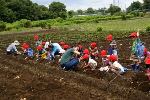 2014-06-27 平成26年度6月27日ジャガイモ掘り・ 053 (800x536)