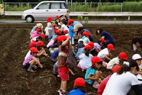 2014-06-27 平成26年度6月27日ジャガイモ掘り・ 054 (800x536)