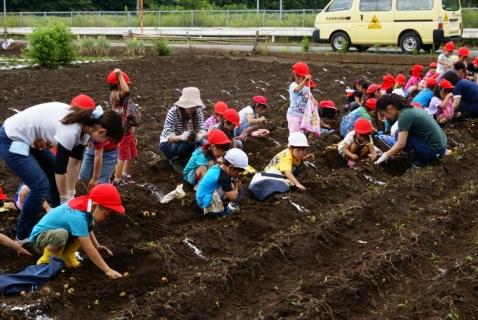 2014-06-27 平成26年度6月27日ジャガイモ掘り・ 055 (800x536)