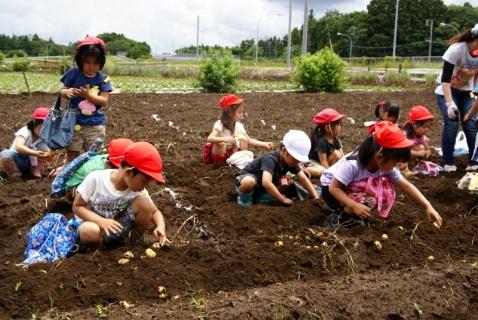 2014-06-27 平成26年度6月27日ジャガイモ掘り・ 060 (800x536)
