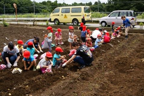 2014-06-27 平成26年度6月27日ジャガイモ掘り・ 056 (800x536) (2)