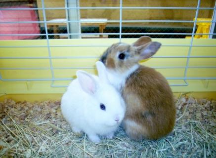 2014-05-26 26年度5月24日、25日川和保育園、ウサギ 011 (1024x749)