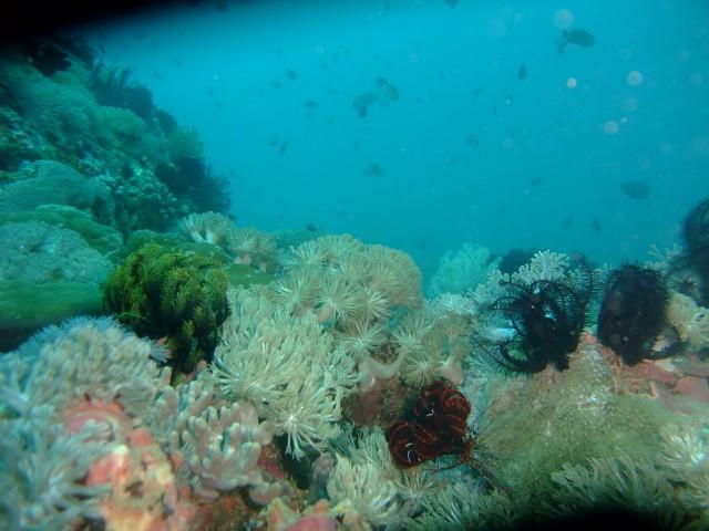 セブの海中4