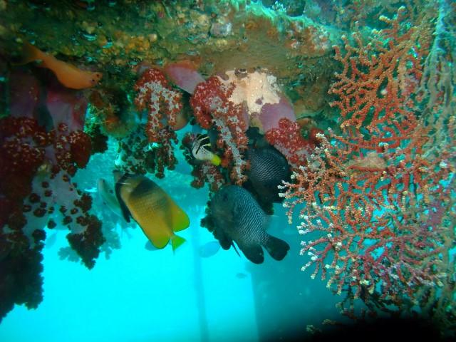 セブの海中7