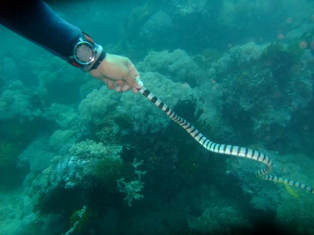 ウミヘビ2