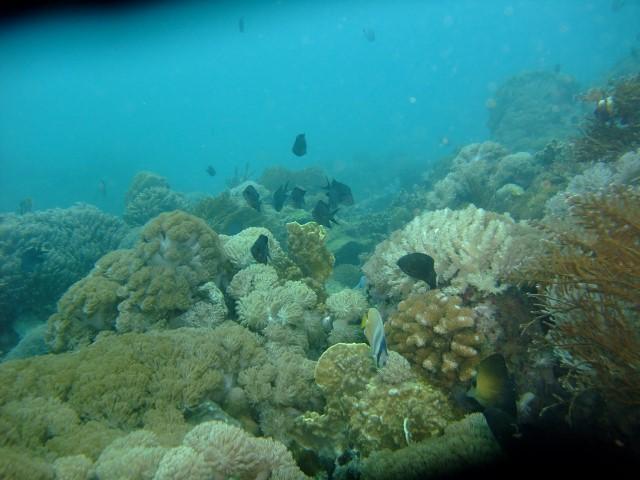 セブの海中8