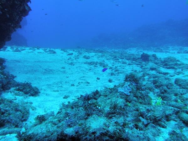 パタネスの海