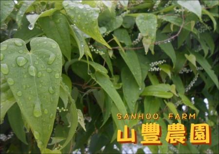 自然薯葉っぱ
